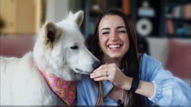 ASMR | Treat Test with Satine | Doggy Mukbang Eating